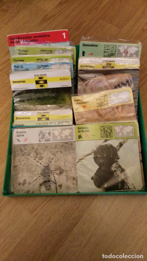 Trading Cards: lote de cantidad tarjetas de animales safari. editions rencontre s.a . Años 70 y 80-fichas safari - Foto 3 - 69615029