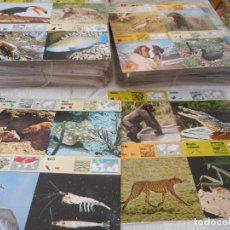 Trading Cards: COLECCIÓN DE FICHAS DE ANIMALES DE LA EDITORIAL RENCONTRE. AÑOS 70 Y 80. NUEVAS, SIN USAR. Lote 97241715