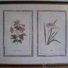 Varios objetos de Arte: CUADRO CON LAMINA CROMOLITOGRAFIA DE BOTANICA.- 1. Lote 225352263