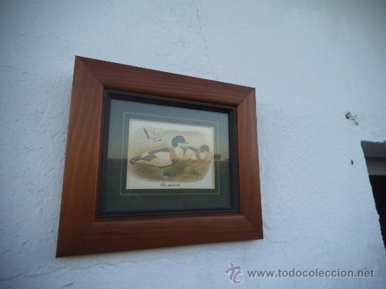 varios objetos de arte laminas modernas patos foto