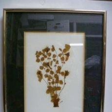Varios objetos de Arte: UN CUADRO DE PLANTA DISECADA, FIRMADA DE J. ESTEVEZ DE 23,5 X 40,5 CM.. Lote 40826525