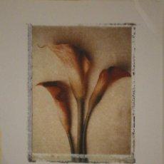 Varios objetos de Arte: LÁMINA DE PINTURA, CALLA LILLY, DEBORAH SCHENCK, 27,5 X 21 CMS. Lote 41774344