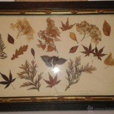 Varios objetos de Arte: CUADRO ANTIGUO REALIZADO CON PLANTAS SECAS - NO XARDIN DE BERTA. Lote 51509743