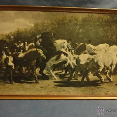 Varios objetos de Arte: TITULO CABALLO FOTOGRAFIA MARCADA. Lote 53507485