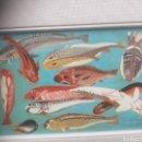Varios objetos de Arte: PINTURA PECES FIRMADO. Lote 104461884