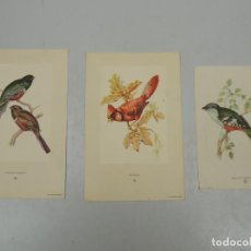 Varios objetos de Arte: VINTAGE COLECCION DE TRES ESTAMPAS TROGON COLLARIS CARDENAL TROGON TEMNURUS 1950. Lote 115629959