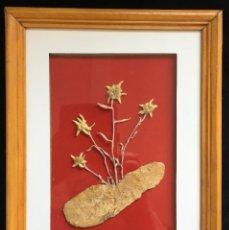 Varios objetos de Arte: CUADRO CON CUATRO FLORES EDELWEISS SECAS (FLOR DE NIEVE), CON MARCO Y CRISTAL PROTECTOR. Lote 130170691