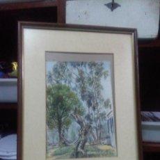 Varios objetos de Arte: CUADRO MADERA MARCO DORADO, ACUARELA, AUTOR N. CARRERAS MEDIDAS 50X40 CM.. Lote 159592698