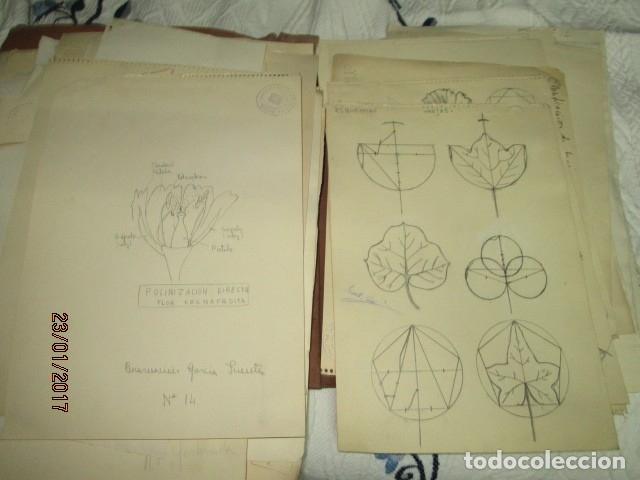 Varios objetos de Arte: ANTIGUA CARPETA CON 65 DIBUJOS ANTIGUA ACADEMIA O TALLER DE ARTE escuela trabajo de ALICANTE - Foto 11 - 176645809