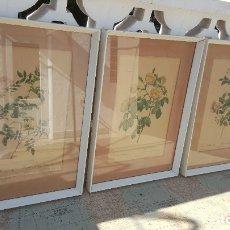 Varios objetos de Arte: 3 CUADROS P.J. REDOUTE PINA IMPRIMERIE DE REMOND . Lote 180040397