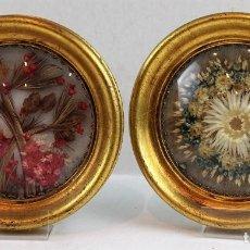 Varios objetos de Arte: DOS COMPOSICIONES DE FLORES SECAS ENMARCADAS. AUTOR: MULLET. Lote 182688666