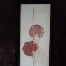 Varios objetos de Arte: ARTE DECORATIVO / * PLANTA SECADA * MONTADA EN MARCO.. Lote 194062427