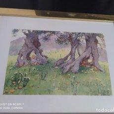 Varios objetos de Arte: CUADRO GRABADO MALLORCA OLIVOS DE VALLDEMOSA. Lote 197804041