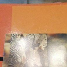 Videojuegos y Consolas: CAJ-101217 PC CD ROM LOTE DE 14 CD ENCICLOPEDIA MULTIMEDIA DE LOS SERES VIVOS PLANETA AGOSTINI VER. Lote 211439180