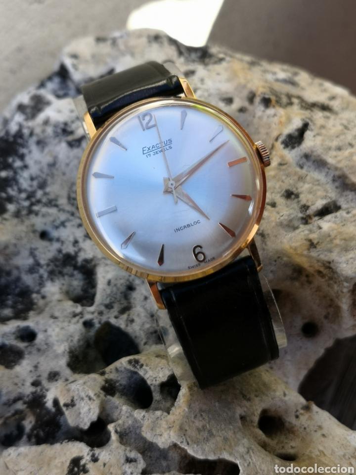 Vintage: ✨C1/5 Reloj vintage Exactus Cuerda NUEVO - Foto 4 - 195386790