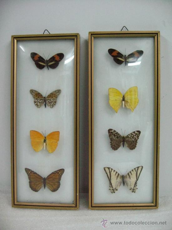 cuadros de mariposas cristal convexo vintage - Comprar en ...