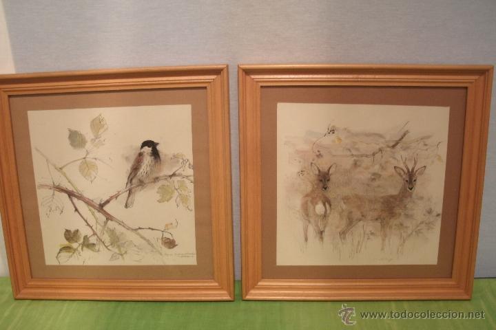 Pareja de cuadros de animales pintados en acuar comprar - Cuadros muy bonitos ...