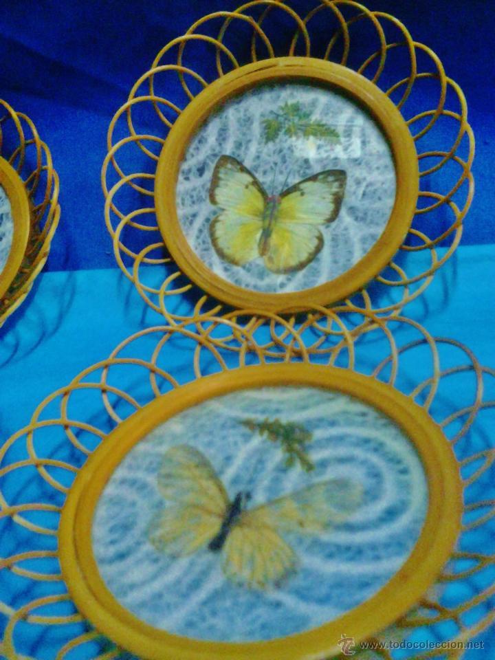 juego de 4 mini cuadros con mariposas disecadas - Comprar en ...