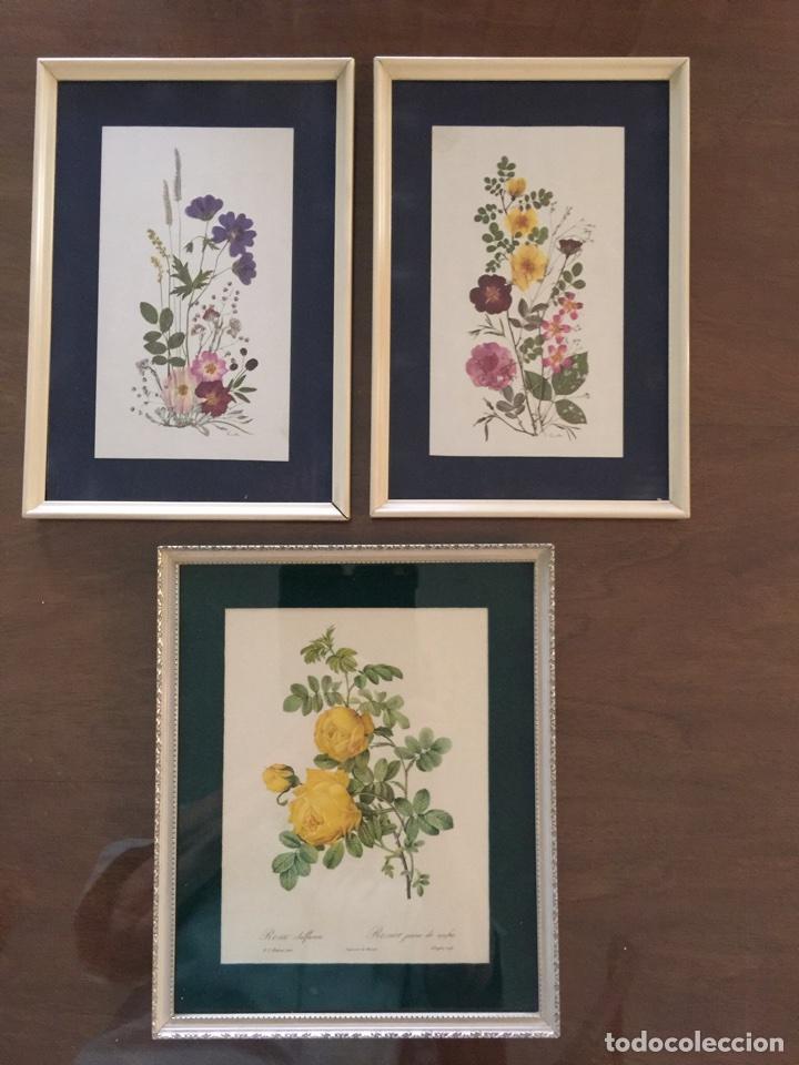 3 laminas botánica enmarcadas años 60 - Comprar en todocoleccion ...