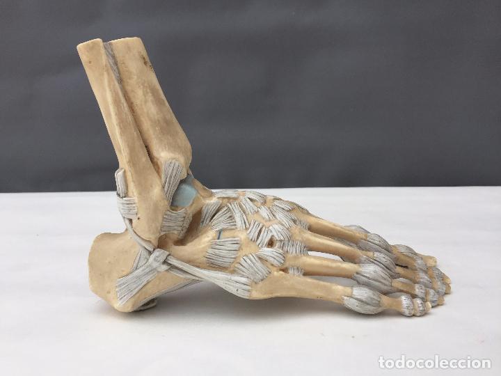 figura modelo estudio anatomia del pie realizad - Comprar en ...