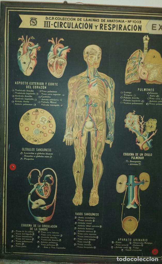 circuito eléctrico de anatomía humana - Comprar en todocoleccion ...