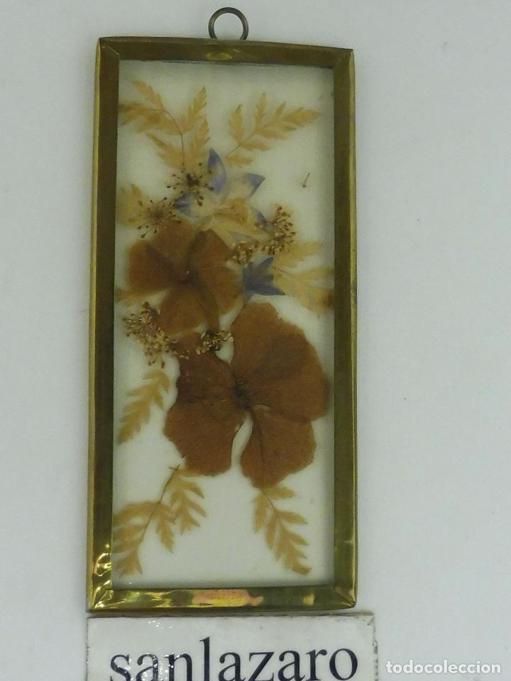 cuadro de flores secas y otras plantas varias m - Comprar en ...