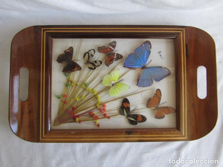 Vintage: Bandeja de madera y vidrio con mariposas. Brasil - Foto 2 - 113357163