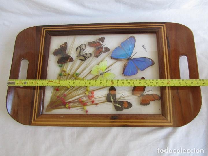 Vintage: Bandeja de madera y vidrio con mariposas. Brasil - Foto 3 - 113357163