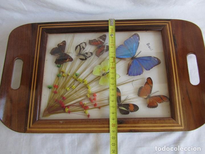 Vintage: Bandeja de madera y vidrio con mariposas. Brasil - Foto 4 - 113357163