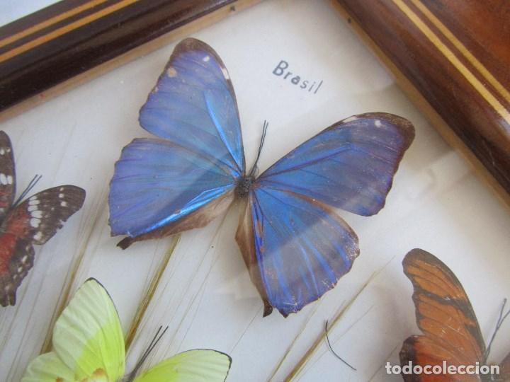 Vintage: Bandeja de madera y vidrio con mariposas. Brasil - Foto 5 - 113357163