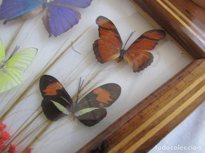 Vintage: Bandeja de madera y vidrio con mariposas. Brasil - Foto 6 - 113357163