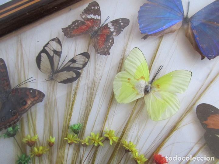 Vintage: Bandeja de madera y vidrio con mariposas. Brasil - Foto 7 - 113357163