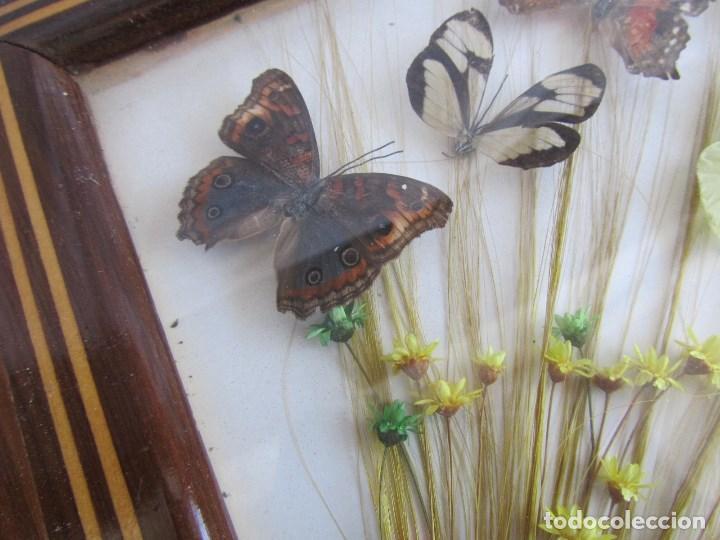 Vintage: Bandeja de madera y vidrio con mariposas. Brasil - Foto 8 - 113357163