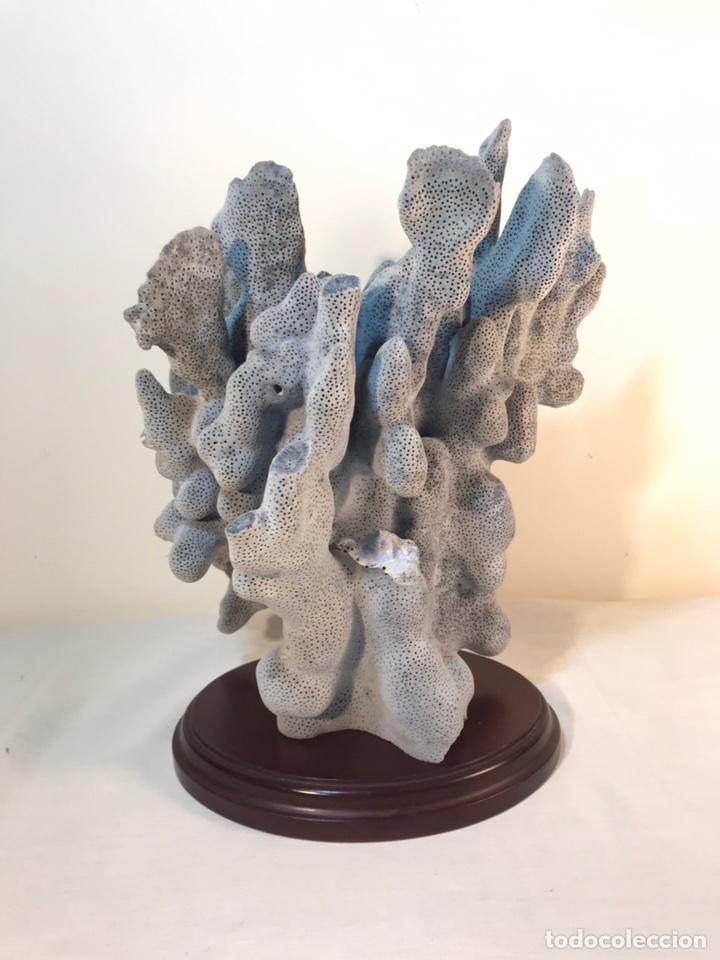 Vintage: Bonito Coral Azul Natural con peana- 20x15x16 cm - Foto 6 - 157908164