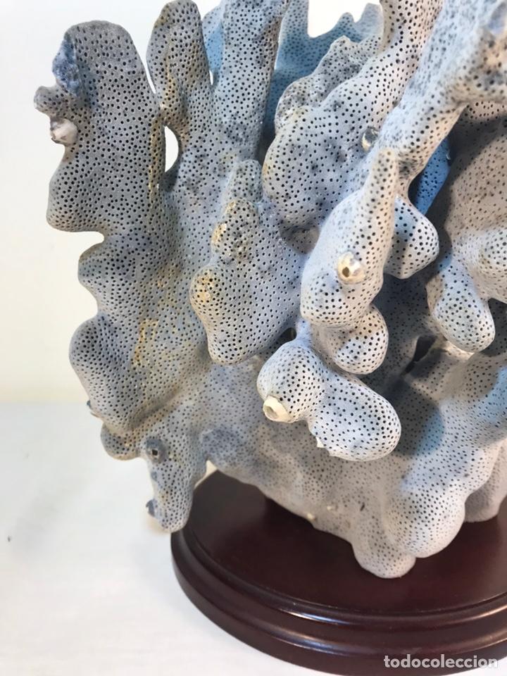 Vintage: Bonito Coral Azul Natural con peana- 20x15x16 cm - Foto 9 - 157908164