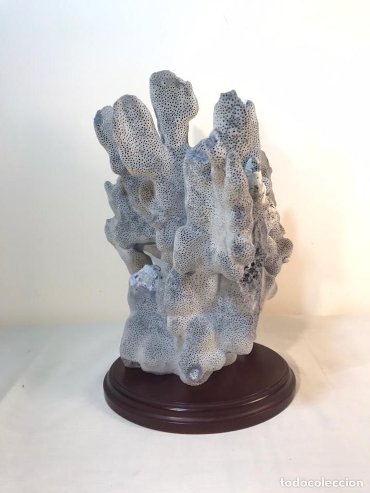 Vintage: Bonito Coral Azul Natural con peana- 20x15x16 cm - Foto 15 - 157908164