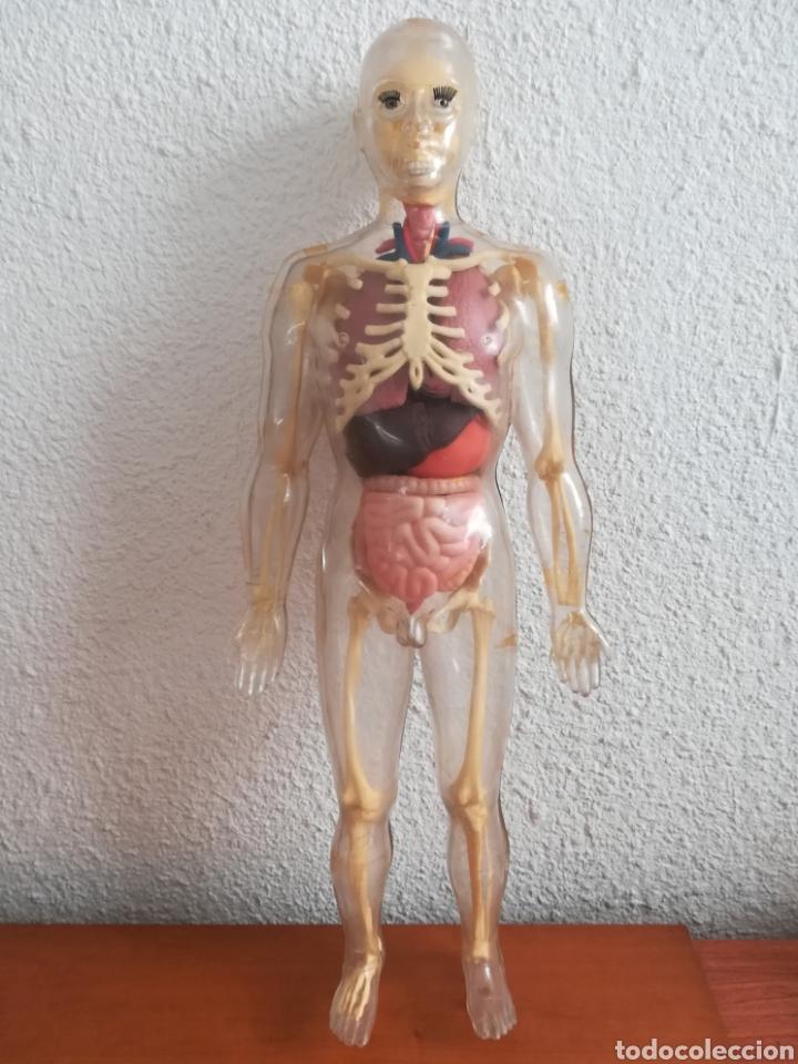 Figura Muñeco Esqueleto Humano Articulado Con P Comprar En