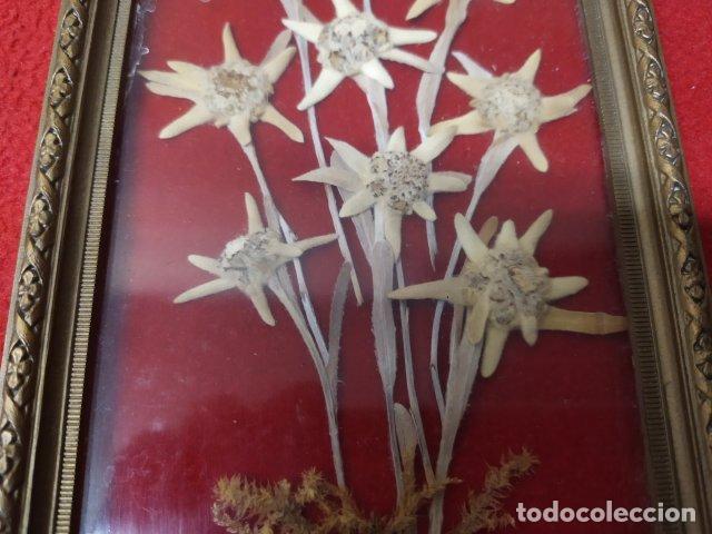 Vintage: ANTIGUO CUADRO CON GRANDES FLORES EDELWEISS - Foto 2 - 213762305