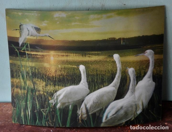 Vintage: Lámina garzas en 3D - Foto 3 - 253168655