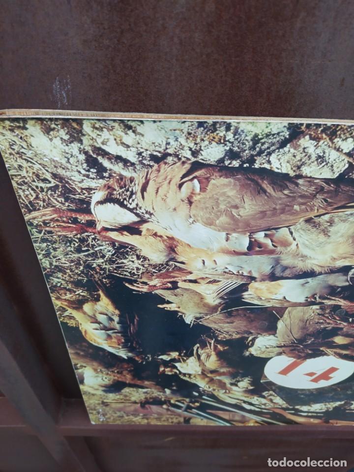 Vintage: Cuadro antiguo, caza - Foto 3 - 293671203