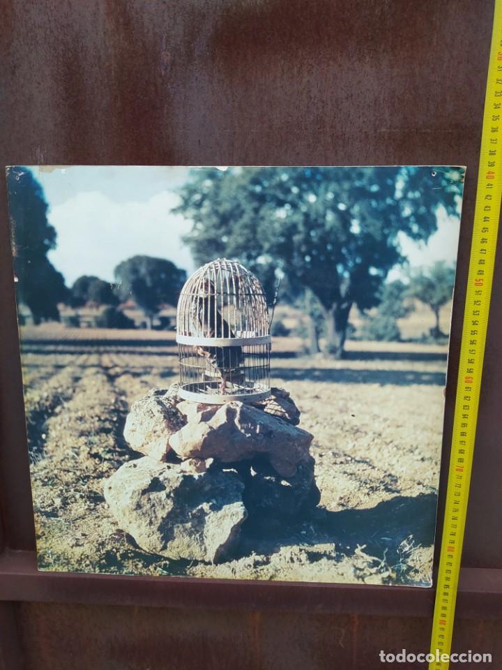 Vintage: Cuadro antiguo, caza de perdiz - Foto 2 - 293672083