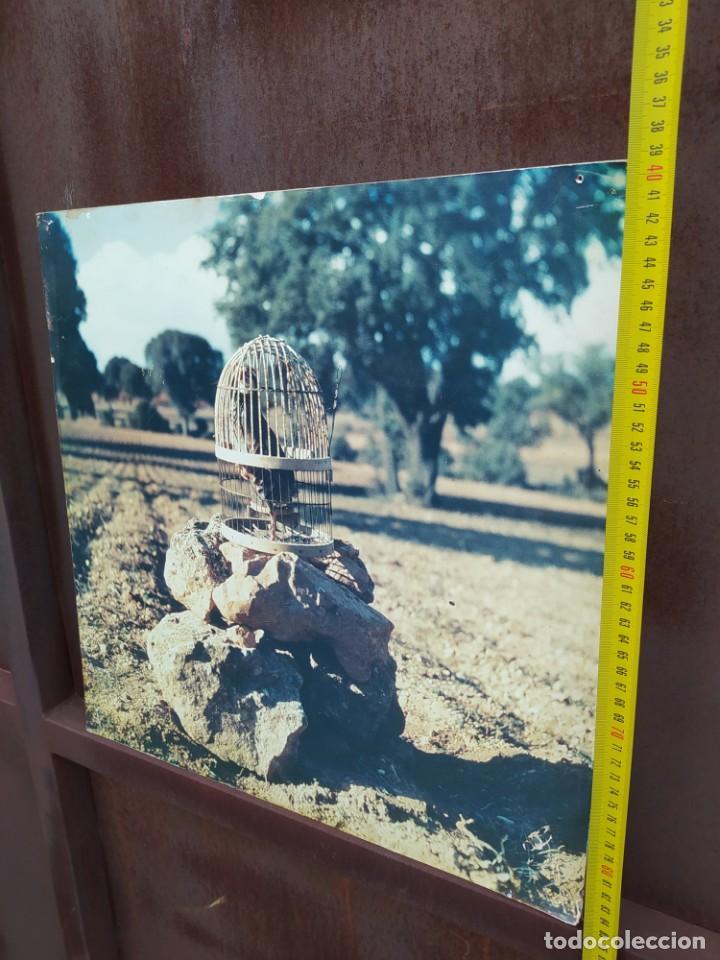 Vintage: Cuadro antiguo, caza de perdiz - Foto 3 - 293672083
